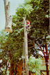 Fall Tree Risk Assessment Ensures Safety All Year