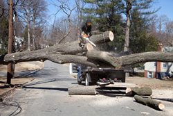 tree removal Snohomish County