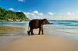 Baby Elephant at Le Meridien Phuket