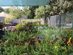 Callaway Gardens Fall Plant Sale