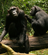 Oakland Zoo Takes Action for Wildlife by Hosting Discovering Primates...