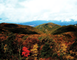 Fall Foliage | Go Blue Ridge Travel