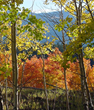 Taos, NM & Enchanted Circle: Best Fall Foliage Trip for Leaf...