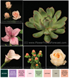 This flower collection is a contemporary blend of vintage garden favorites.