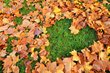 Senske Services Releases Its Top Lawn Tips for Fall 2014