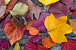 Tips for Keeping Curb Appeal as the Leaves Change