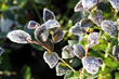 Protect BrazelBerries Edible Berries From Old Man Winter With These...