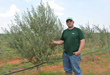 Turf Feeding Systems Helps Texas Olive Growers Reduce Loses and...
