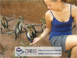 Wildlife Internships and Volunteer Projects Abroad in monkey sanctuary in Africa
