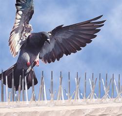 plastic bird spike