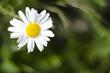 Get Picture-Perfect with New Depth of Field Service (DOF) from...