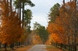 More than Green Pines for Fall Color in Moore County, NC Says the CVB