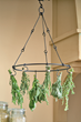Herbs can easily be hung and dried on drying racks.