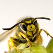 Nashville Exterminators Warn Residents On Ground Yellow Jacket Nests