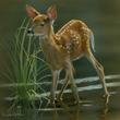 Alert White Tail Deer by Karen Latham