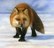 Fox by Rebecca Latham
