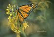 Butterfly by Bonnie Latham
