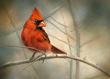 Cardinal by Bonnie Latham