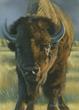 American Bison by Karen Latham