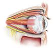 Pitt Researchers Aim to Make Whole-Eye Transplantation a Reality