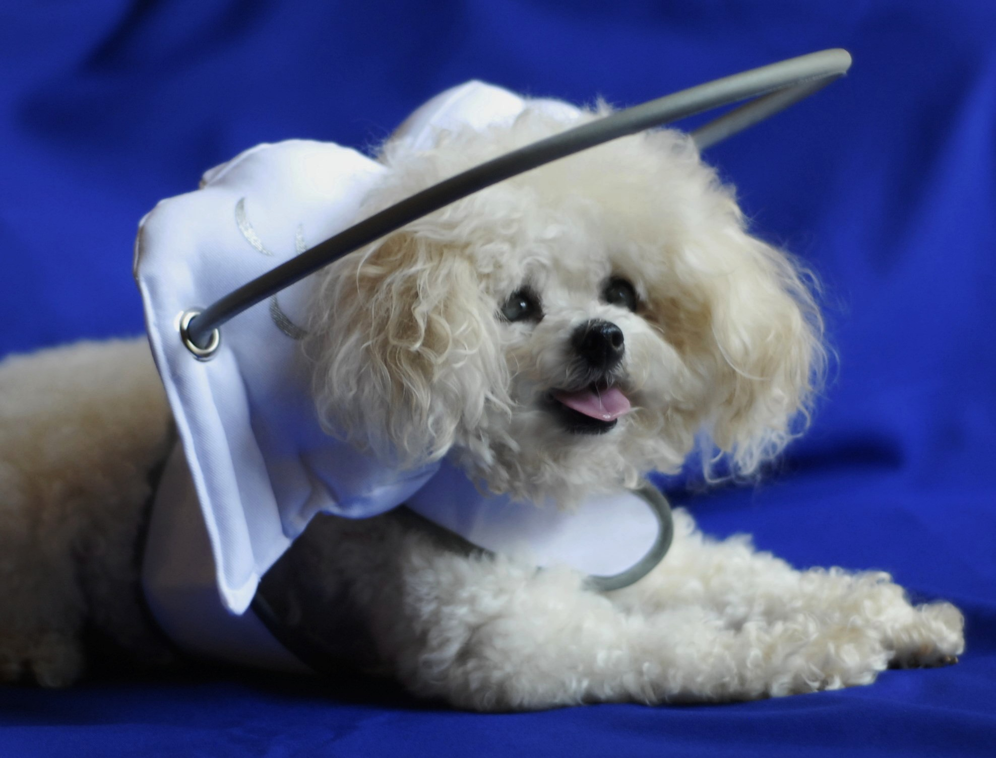 Muffin S Halo A Blind Dog Product Named Top 10 Pet