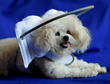 Muffin's Halo, A Blind Dog Product Named Top 10 Pet Inventions by...