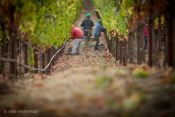 2014 Napa Valley wine grape harvest was the earliest in decades and is expected to be one of its highest quality vintages.