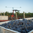 Napa Valley's 2013 harvest value was over $650 million; 2014 is anticipated to be even higher.