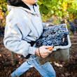 Although the demand for labor peaks during the harvest season, members of the Napa Valley Grapegrowers rely on a highly skilled workforce year round and are able to provide much more stable employment than growers of other crops, like annual vegetables.