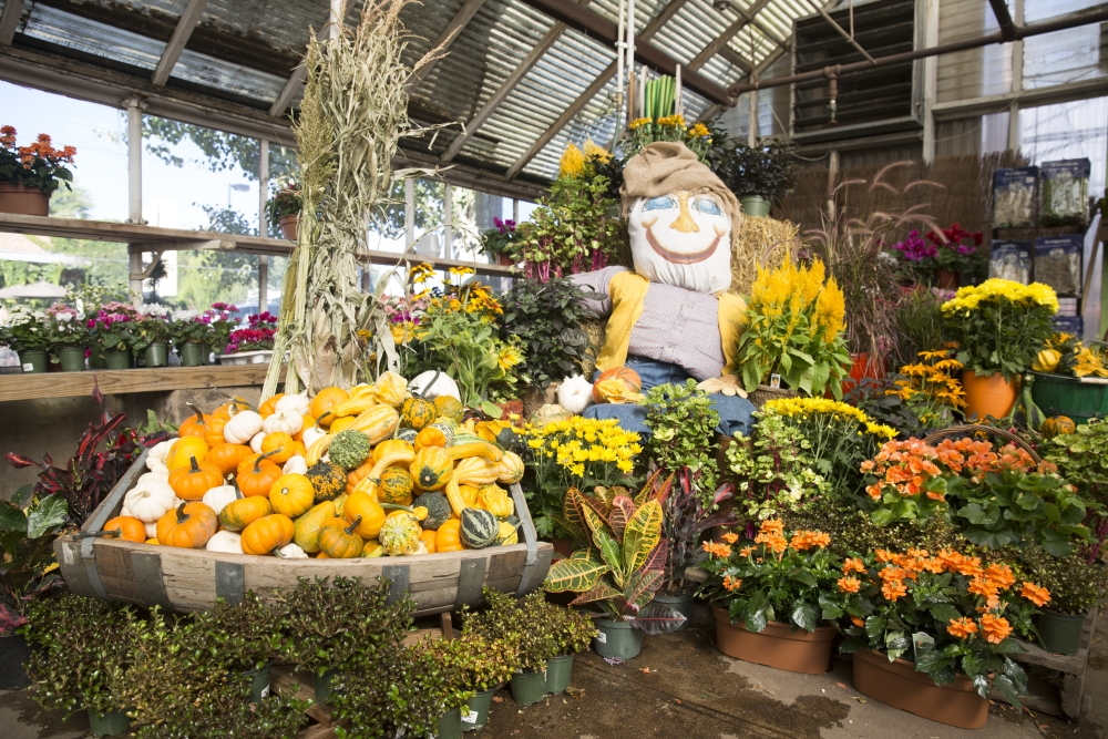 City Floral Garden Center Hosts Fall Festival On October