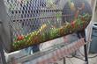City Floral Garden Center | Garden Services, Greenhouse, Garden Gift Shop | Denver, CO