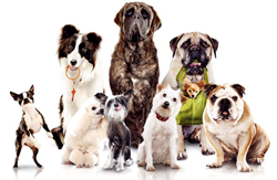 Elmhurst Toyota Dog Training Event
