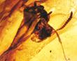 Secrets of Dinosaur Ecology Found in Fragile Amber