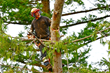 Tree Removal or Pruning Before Winter Sets In Emphasized by Precision...
