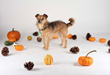 Spend Halloween Weekend at the San Francisco SPCA's...