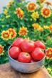 Burpee's 'Cloudy Day' Tomato