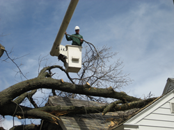 Tree removal with bucket truck of hazardous tree that fell on a house during a storm