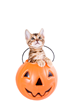 ASPCA Offers Top 5 Tips to Avoid Frights on Howl-o-ween