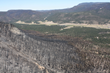 Forest Treatment Saved the Town of Alpine / Wallow Fire 2011