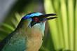 Two Belize Birding and Nature Tours Announced by Naturalist Journeys