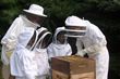 Old Trail School students working with teachers to harvest organic honey from the School's two beehives