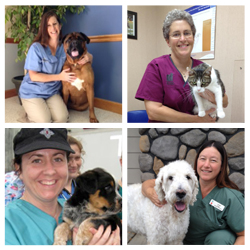 Four of the eight contest finalists including Deanna Goley (top left), Judy Voegel (top right), Elizabeth Salan (bottom left), and Laurie Flood (bottom right).