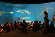 Teachers Can Preview Educational Opportunities at Maritime Aquarium...