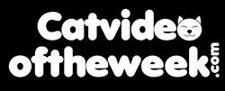 catvideooftheweek.com