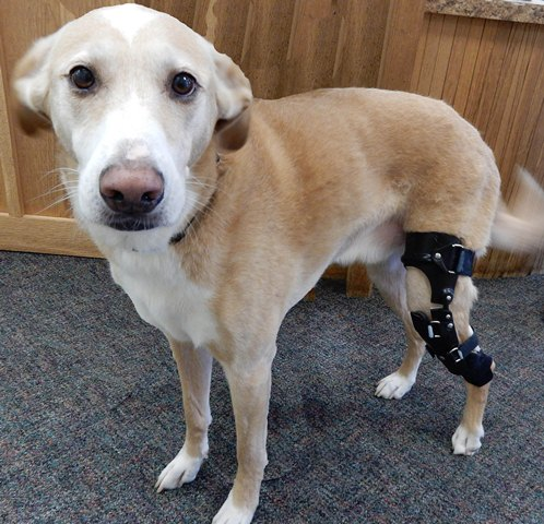 My Pet S Brace Provides Its 1000th Patient With A Canine