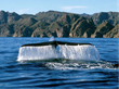 Get Up Close With Whales at Villa del Palmar at the Islands of Loreto,...