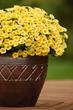 2015 Garden Trends
