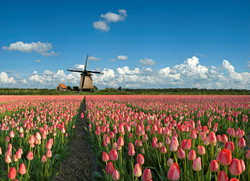 Holland & Belgium Family Biking