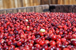 U.S. Grown Cranberries Covet Chinese Taste Buds