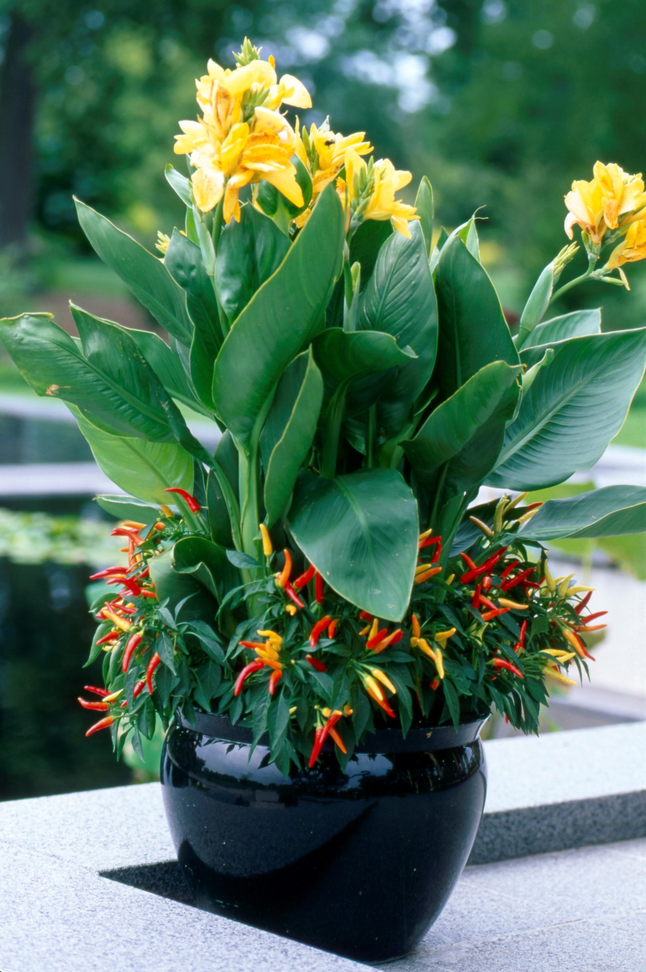 Garden Media Group Unveils Its 2015 Garden Trends